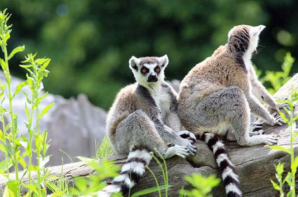 Splendeurs De Madagascar  - Photo