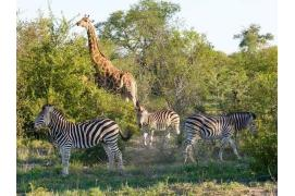 circuit Afrique du sud Safari Dream -