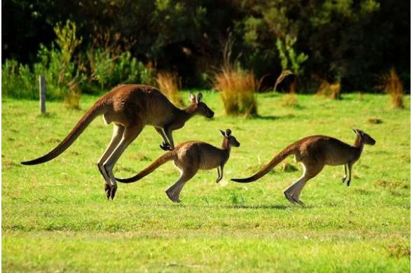 Australie Passion - Photo