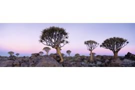 circuit Namibie Premiers Regards Namibie -