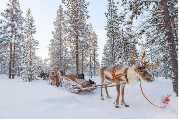 Noël En Laponie Finlandaise - Photo