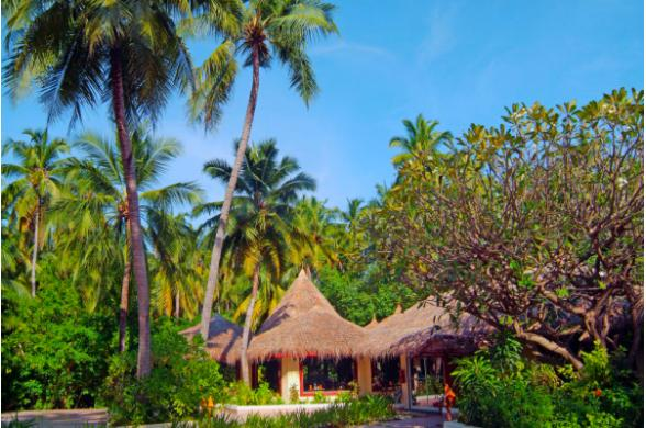 Biyadhoo Island Resort &spa  - Photo