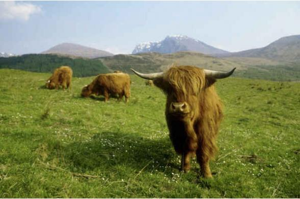 Splendeurs De L'ecosse - Photo
