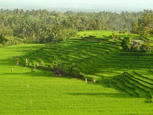 Douceurs de Bali