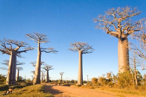 Splendeurs de Madagascar