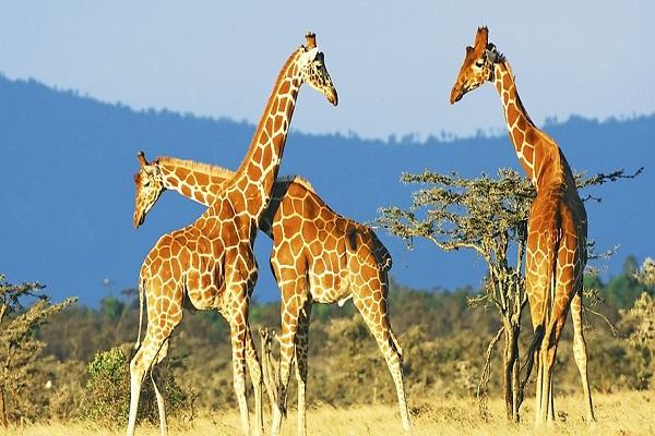1ers regards Kenya
