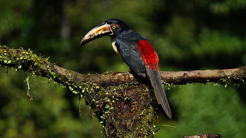 Merveilles du Costa Rica
