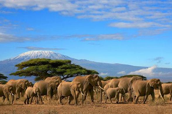Douceurs du Kenya