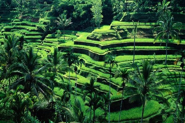 Charmes de Bali en h�tels 3*et Charme