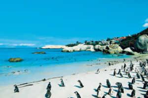 Afrique du Sud3