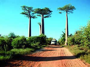 Madagascar5