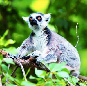 Madagascar6