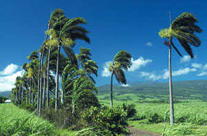 Réunion6