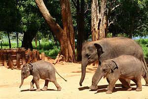 Sri Lanka5