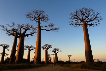 Splendeurs De Madagascar & Extension Salary 16j/13n - 2020 - Photo