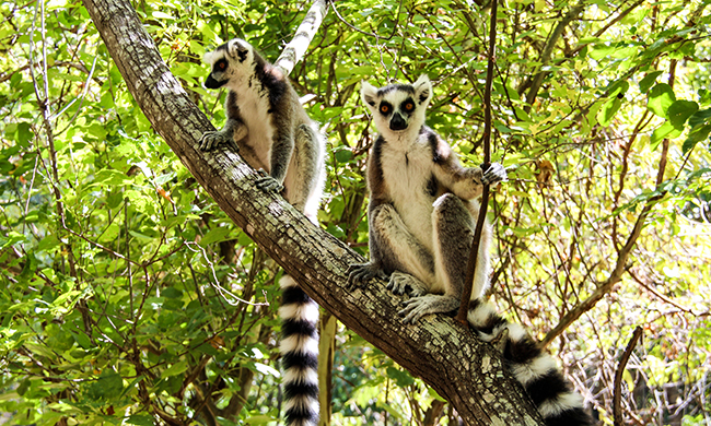 circuit Madagascar Confidentiel Madagascar + Extension Le Paradisier -